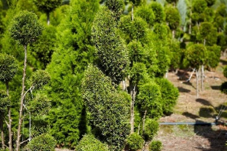 Formowanie drzew i krzewów.