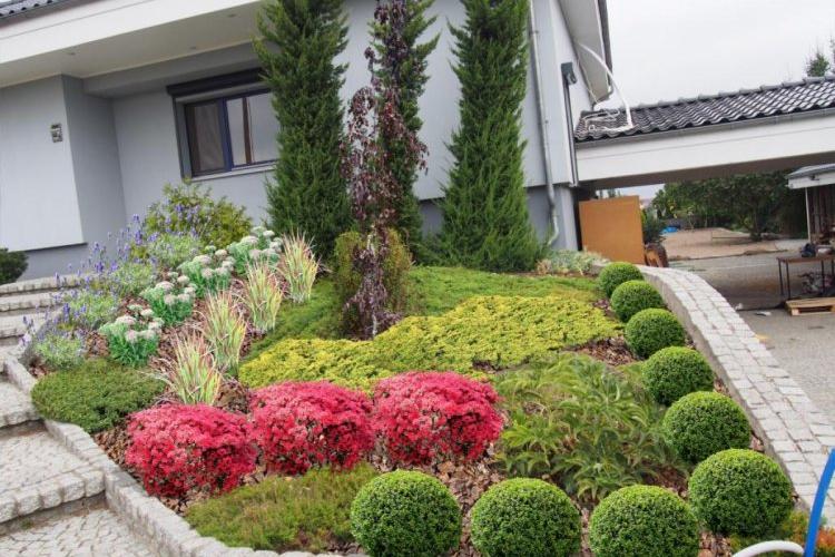 Jedna z opcji uzupełnienia nasadzeń na wzniesieniu w przed ogródku.